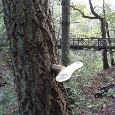 Clockwork-Forest-2-1.jpg